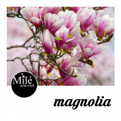 Magniola